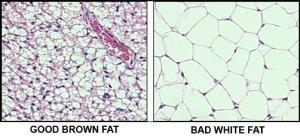 fat_002